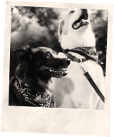 Tito's Vodka polaroid of two dogs