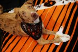 Tito's Vodka Love Your Pet Day