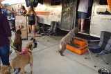 Dogs at Tito's Vodka Trailer at Bark in the Park