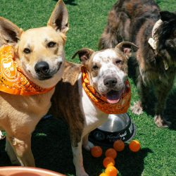 three smiling dogs on tito's vodka love your pet day