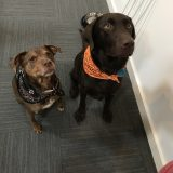 Tito's Vodka dogs, Banjo and Isabel, sit patiently for a treat.