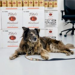 Harper sitting in front of tito's boxes