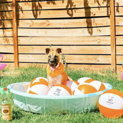 Weller enjoying the outdoors and some Tito's beach balls
